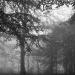 m. en g. tussen bomen in mist